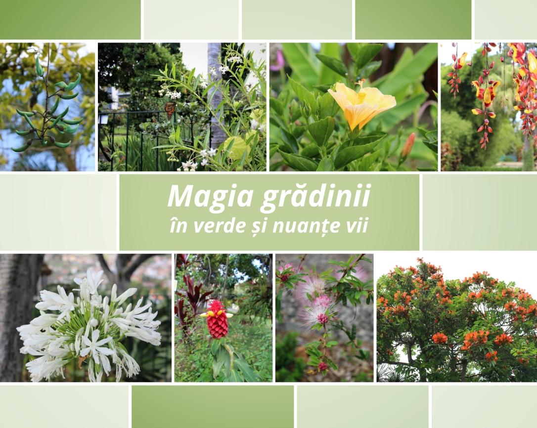 Magia grădinii madeireze colaj